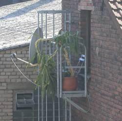 balconyw2.jpg