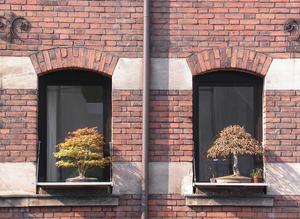 bonsai2w.jpg