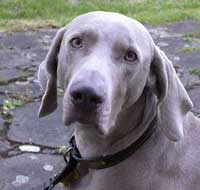 dog2_050608w2.jpg