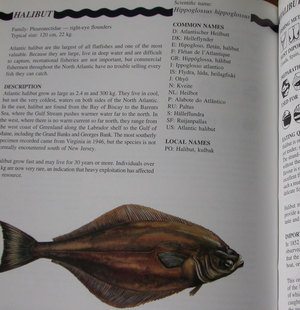 fish1w.jpg