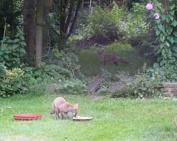 fox1w_050612w.jpg