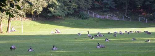 geese3w.jpg