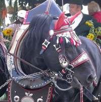 horse1w.jpg